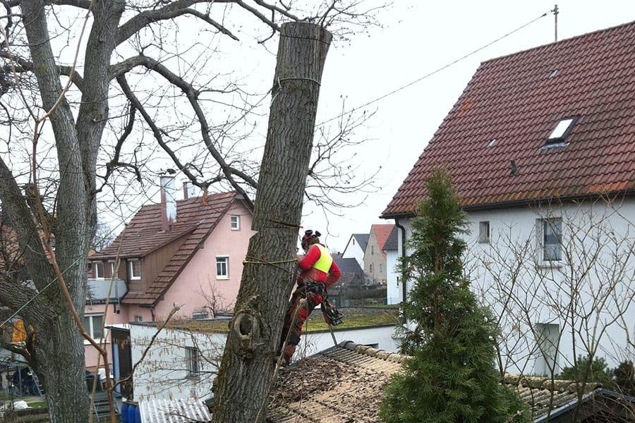 Stein-und-Garten-GmbH-Filderstadt-Problemfaellung